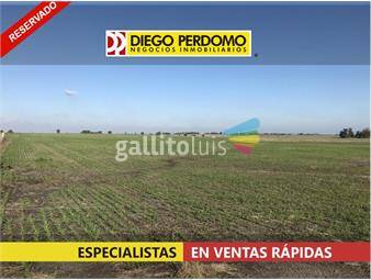 https://www.gallito.com.uy/campo-480-ha-en-venta-colonia-inmuebles-16013773