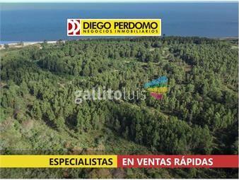 https://www.gallito.com.uy/campo-en-venta-40-has-inmuebles-16074442