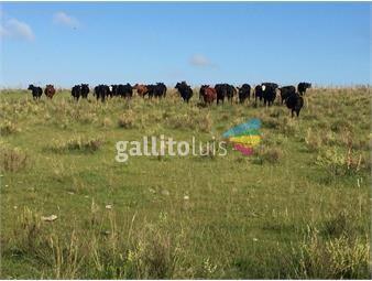 https://www.gallito.com.uy/durazno-483-ha-ganaderoagricola-coneat-108-instalaciones-inmuebles-16144882