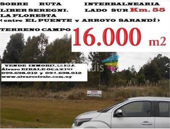 https://www.gallito.com.uy/2021-la-floresta-16000-m2-ruta-interbalneariasur-km-55-inmuebles-16103271