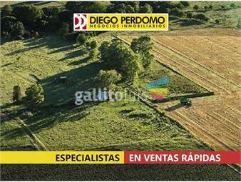 https://www.gallito.com.uy/campo-de-45-has-en-venta-libertad-inmuebles-16293781