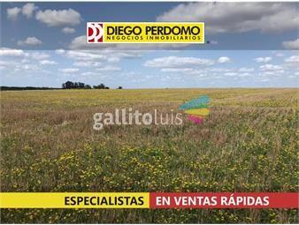 https://www.gallito.com.uy/campo-en-venta-42-has-san-jose-de-mayo-inmuebles-16998765