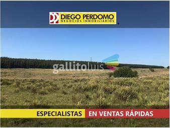 https://www.gallito.com.uy/campo-en-venta-205-has-flores-inmuebles-17110024