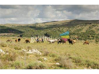 https://www.gallito.com.uy/ref-2657-chacras-en-ruta-60-minas-5-has-inmuebles-17264330