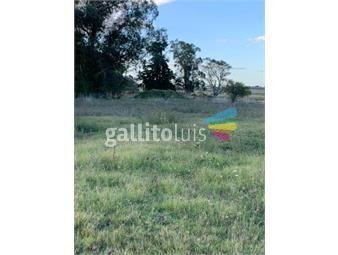 https://www.gallito.com.uy/hermosas-chacras-de-3-hectareas-inmuebles-17311090