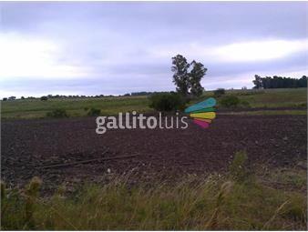 https://www.gallito.com.uy/campo-completo-tambo-casa-arroyo-a-min-de-ciudad-inmuebles-17821812