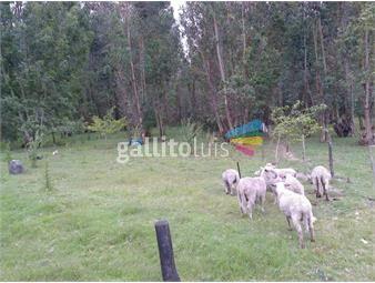 https://www.gallito.com.uy/campo-completo-tambo-casa-arroyo-a-min-de-ciudad-inmuebles-17821999