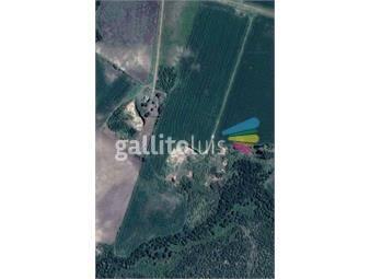 https://www.gallito.com.uy/20min-de-carmelo-agricola-y-cantera-de-balastro-oportunidad-inmuebles-17872598