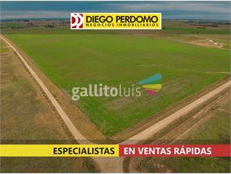 https://www.gallito.com.uy/campo-de-53-has-en-venta-san-jose-inmuebles-17856622