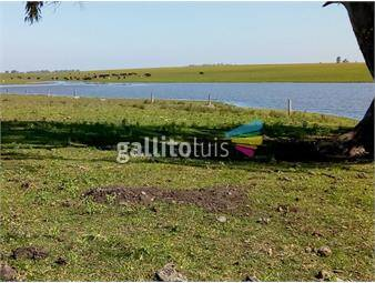 https://www.gallito.com.uy/dueño-directo-campo-ganadero-en-arrendamiento-inmuebles-17952093