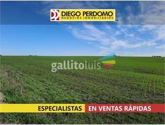 https://www.gallito.com.uy/campo-de-90-has-en-venta-san-jose-inmuebles-17873655