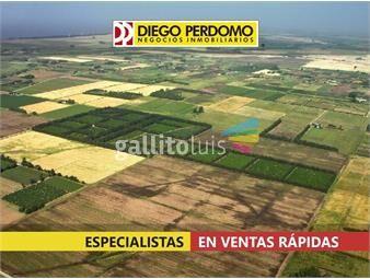 https://www.gallito.com.uy/campo-de-150-has-en-venta-san-jose-inmuebles-18287306