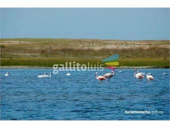 https://www.gallito.com.uy/lotes-de-terrenos-en-laguna-negra-inmuebles-18431267