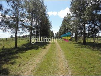 https://www.gallito.com.uy/excelente-campo-de-51-has-con-2-casas-galpon-y-represa-inmuebles-18449188