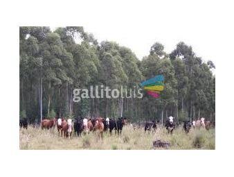 https://www.gallito.com.uy/800-has-forestal-ganadero-y-forestado-inmuebles-18562324