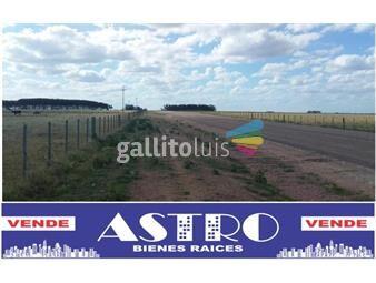 https://www.gallito.com.uy/campo-ganadero-–-forestal-sobre-ruta-41-km-7-inmuebles-18843192
