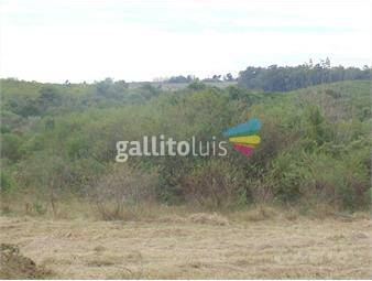 https://www.gallito.com.uy/terreno-en-punta-gorda-zona-en-expansion-inmuebles-16760735