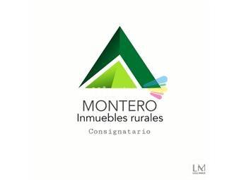 https://www.gallito.com.uy/781-has-ganadero-forestal-y-forestado-inmuebles-18562324