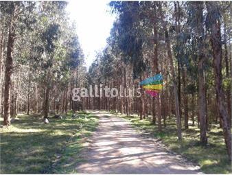 https://www.gallito.com.uy/inmobiliaria-solicita-para-compra-hasta-1000-has-forestal-inmuebles-19360821