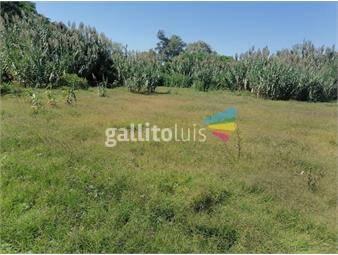 https://www.gallito.com.uy/alquiler-3-terrenos-a-1-cuadra-de-av-giannattasio-shangrila-inmuebles-19360937