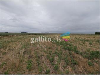 https://www.gallito.com.uy/campo-agricola-de-530-has-exelente-ubicaccion-inmuebles-19404206