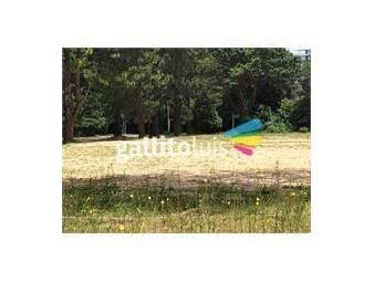 https://www.gallito.com.uy/cantegril-ultimos-terrenos-1000-a-6200-m2-financiados-inmuebles-20192187