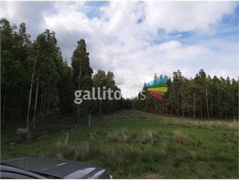 https://www.gallito.com.uy/flores-oportunidad-210-con-forestaccion-inmuebles-19721203
