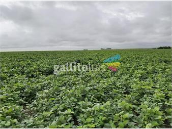 https://www.gallito.com.uy/florida-oportunidad-112-has-agricolas-inmuebles-19721219