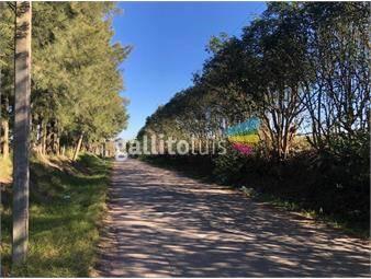 https://www.gallito.com.uy/terreno-de-15-ha-rural-o-suburbano-inmuebles-20232316
