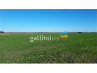 https://www.gallito.com.uy/estancia-de-600-has-con-400-arables-inmuebles-20524550