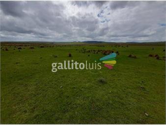 https://www.gallito.com.uy/treinta-y-tres-430-has-forestal-ganadero-inmuebles-20594242