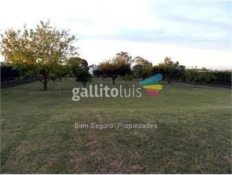 https://www.gallito.com.uy/gran-terreno-en-venta-en-camino-de-las-colmenas-inmuebles-16929115