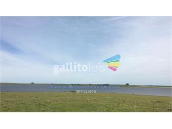 https://www.gallito.com.uy/excelente-campo-con-costa-al-rio-negro-inmuebles-17837443