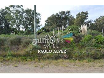 https://www.gallito.com.uy/terrenos-venta-punta-colorada-te889-inmuebles-17842150