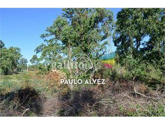 https://www.gallito.com.uy/terrenos-venta-punta-colorada-te437-inmuebles-18013714