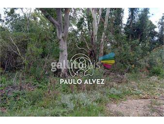 https://www.gallito.com.uy/terrenos-venta-punta-colorada-te760-inmuebles-18013759