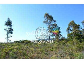 https://www.gallito.com.uy/terrenos-venta-punta-colorada-te531-inmuebles-18295574