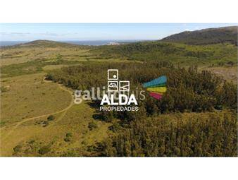 https://www.gallito.com.uy/terreno-en-punta-colorada-inmuebles-14571264