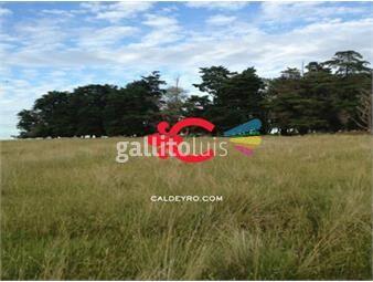 https://www.gallito.com.uy/campo-agricola-ganadero-en-durazno-ref-2623-inmuebles-18499849