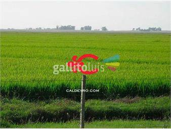 https://www.gallito.com.uy/campo-en-rocha-ref-6485-inmuebles-18499853