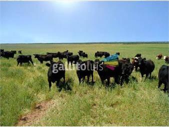 https://www.gallito.com.uy/campo-en-venta-en-salto-ref-7339-inmuebles-18499872