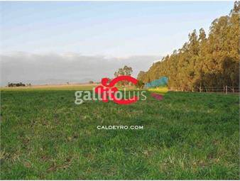 https://www.gallito.com.uy/haras-en-venta-en-canelones-ref-5491-inmuebles-18488573