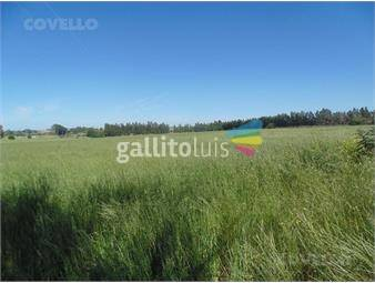 https://www.gallito.com.uy/campo-sobre-ruta-1-colonia-valdense-inmuebles-18646422