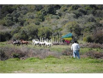https://www.gallito.com.uy/campo-jose-batlle-y-ordoñez-650-ha-coneat-43-suelo-2-inmuebles-18542123
