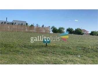 https://www.gallito.com.uy/terreno-colinas-de-carrasco-inmuebles-18696443