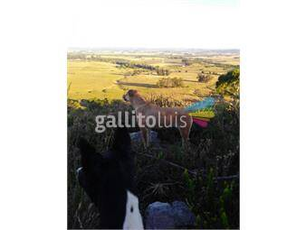 https://www.gallito.com.uy/campo-en-minas-agropunta-inmobiliaria-ref5446-inmuebles-18755228