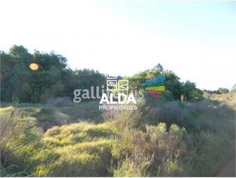 https://www.gallito.com.uy/terreno-en-barra-portezuelo-inmuebles-13951263
