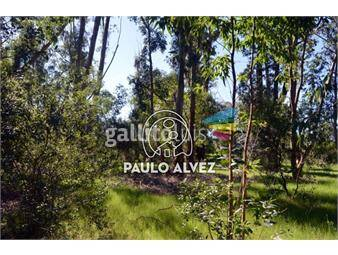 https://www.gallito.com.uy/terrenos-venta-punta-colorada-te431-inmuebles-18760714