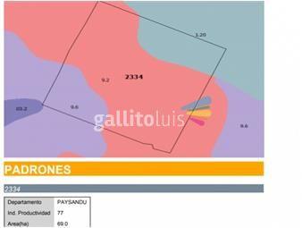 https://www.gallito.com.uy/campo-con-vivienda-en-paysandu-uruguay-inmuebles-18730314