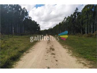 https://www.gallito.com.uy/campo-de-10-ha-paso-antolin-depto-colonia-r-22-inmuebles-17897064